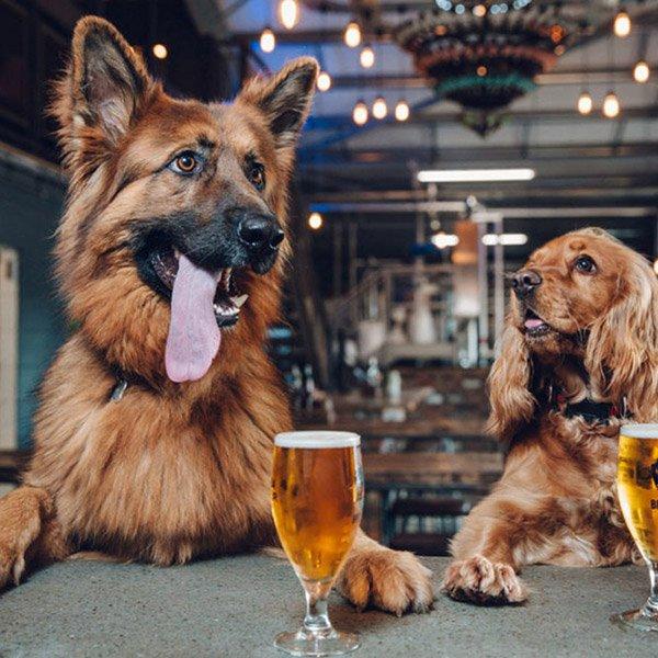 Best Cask Beers for Pubs
